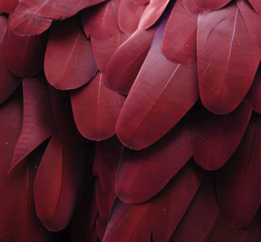 Pantone announces its 2015 colour of the year: Marsala